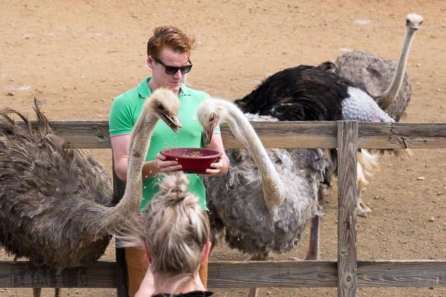 Ostrich Farm Curacao