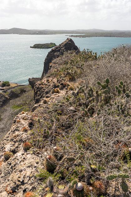 Koraal Tabak Curacao