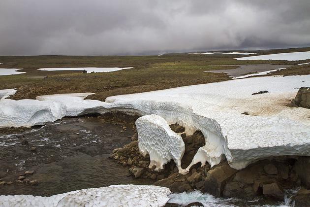 Elephant Ice Sculpter Iceland