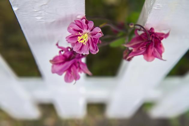 Ísafjörður Flowers
