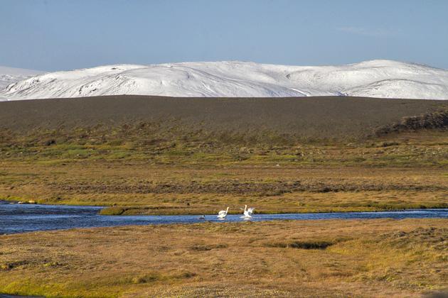 Geese Snow