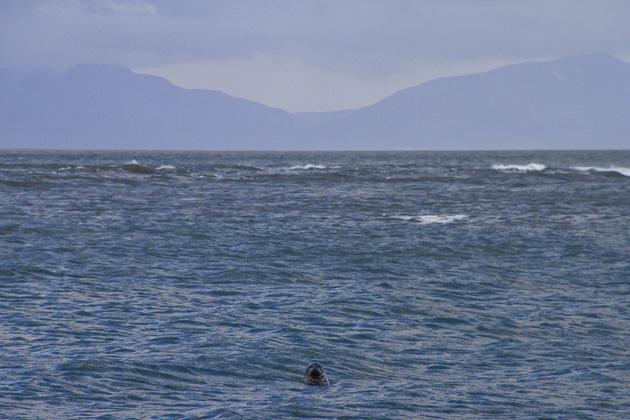 Seal Beach Ósar