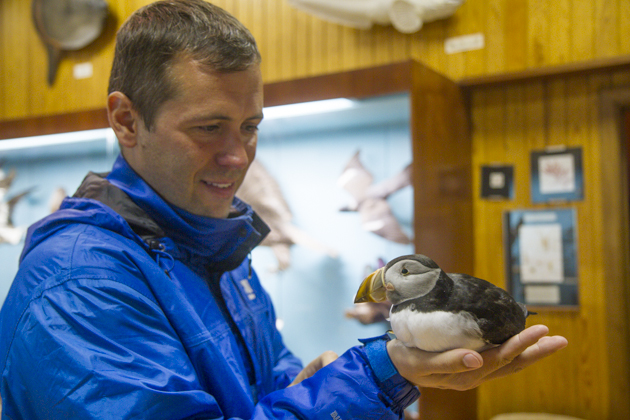 Holding Puffin