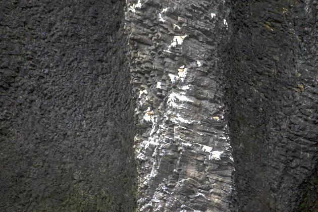 Basalt Stone Sea Brids