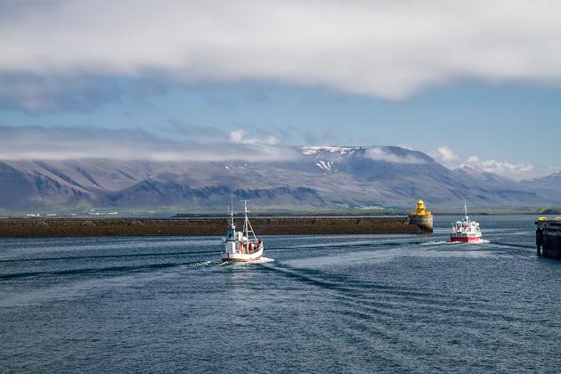 Harbor Reykjavik