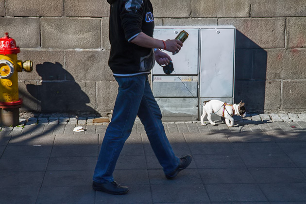 French Bulldog And Beer