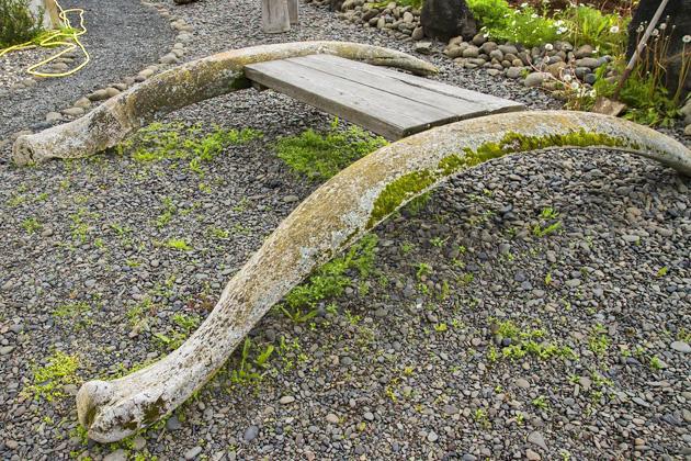 Whale Bone Table