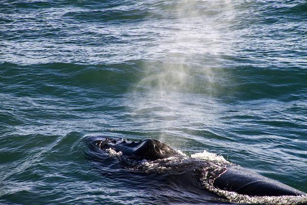 Húsavík Whales