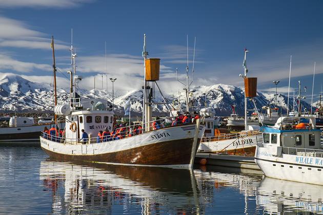 Ice Fishing Húsavík