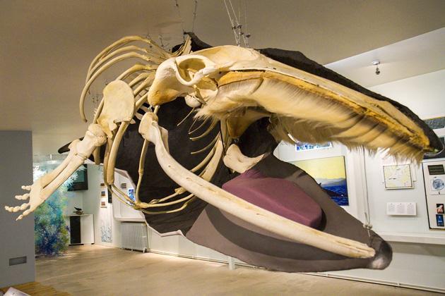 Whale Museum Húsavík