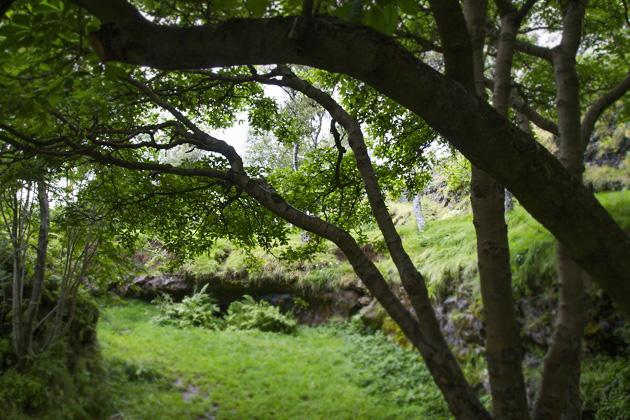 Lava Garden Hafnarfjörður