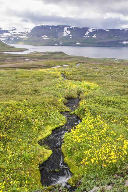 Small River Hornstrandir