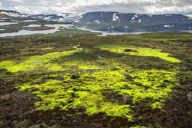 Moss Landscapes Iceland