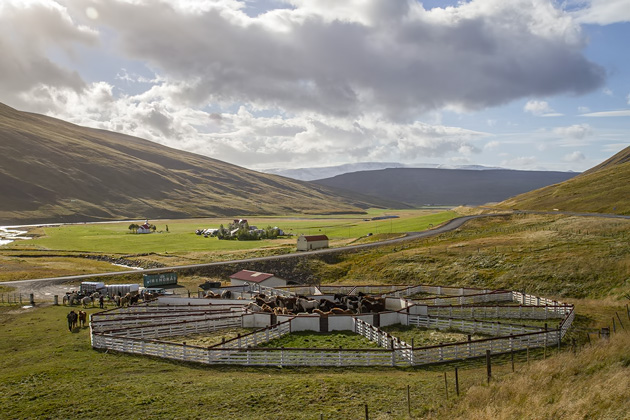 Horse Corral Iceland