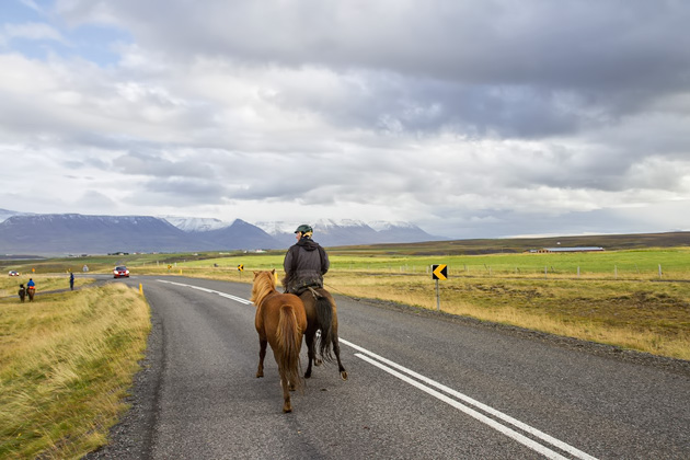 Horse Highway Iceland