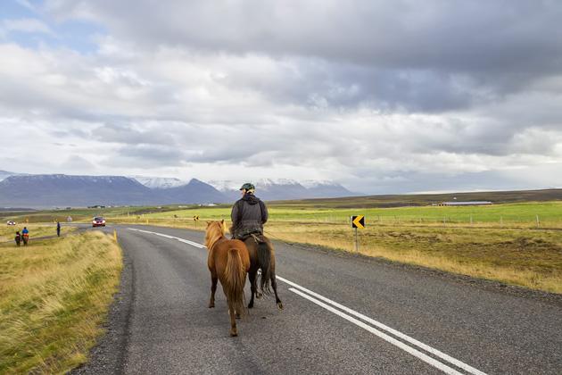 Horse Highway Iceland