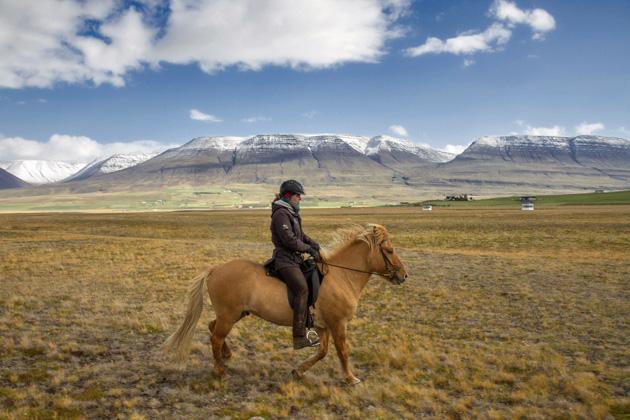 Isländisches Pferd Island