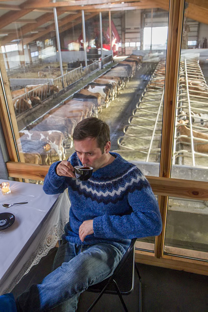 Cow Cafe Iceland