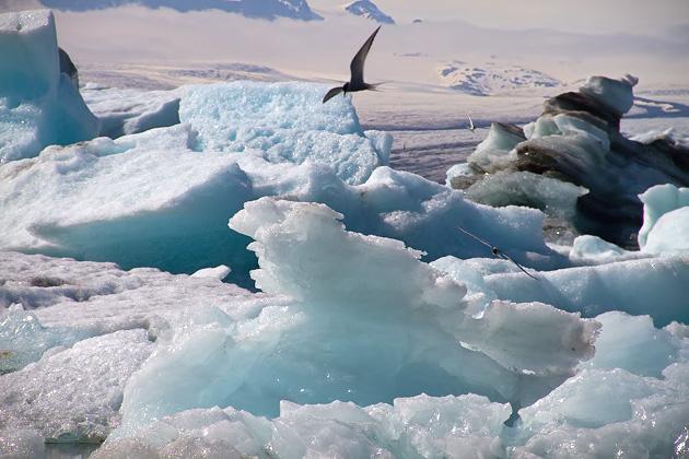 Jökulsárlón Arctic Turn
