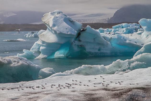 Birds Glacier Lagoon