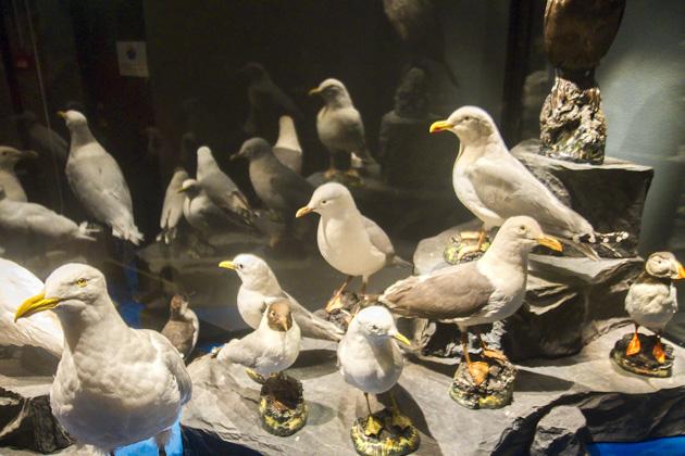 Bird Museum Iceland