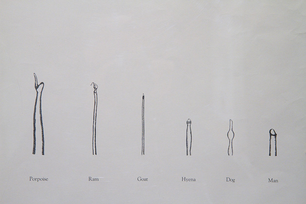 Different Penis Drawings