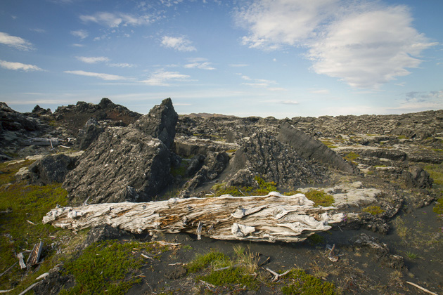 Dead Trees Iceland