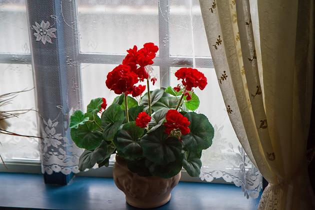 Stykkishólmur Red Flowers