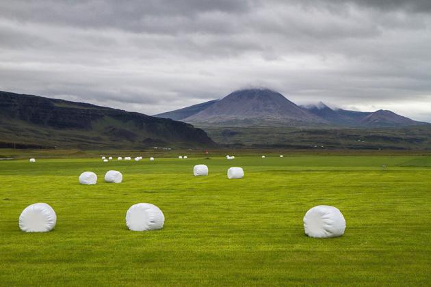 Farmers Iceland