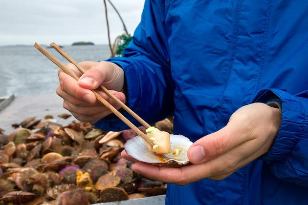 Viking Sushi Tour Iceland