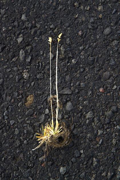 Lost Plant