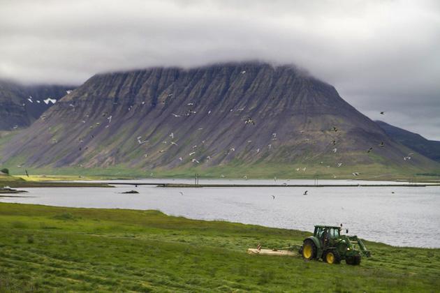 Farming Photo Iceland