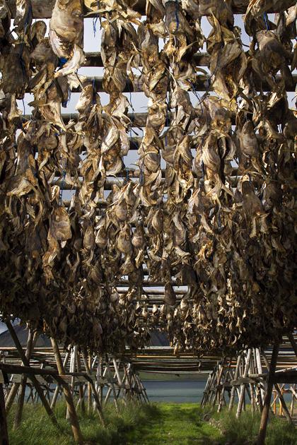 Dried Fish Iceland