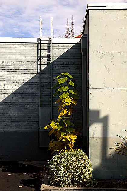 Boise-Plant