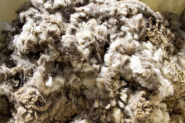 Wool Idaho