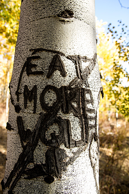 Eat More Wolf