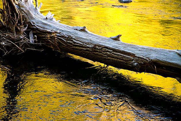 Golden Log