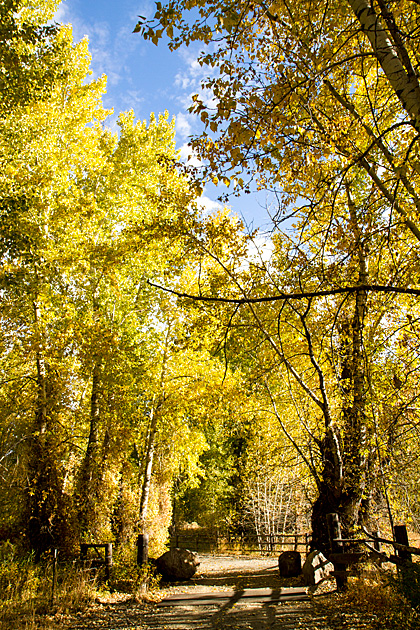 Idaho-Fall-2012