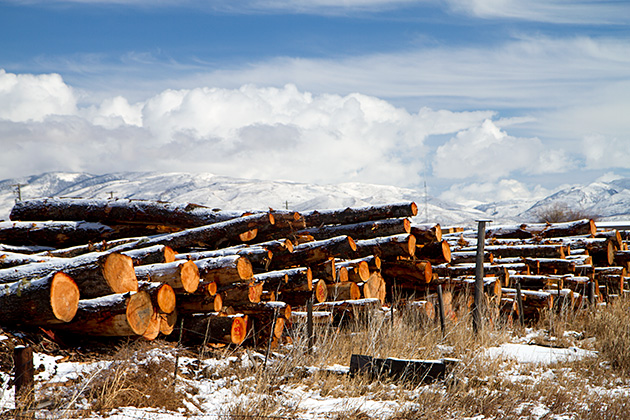 Winter-Wood