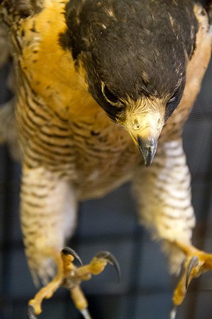 Bird-Attack