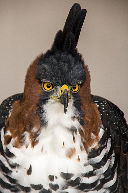 Crazy-Feather-Bird