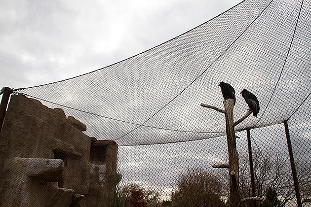 Super-Cool-Condors