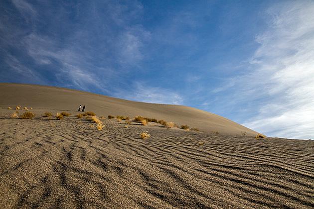 Bushy Dunes