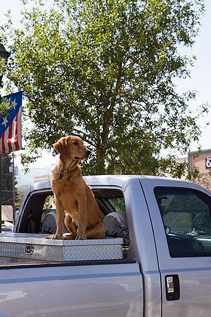 Proud-Dog-Idaho