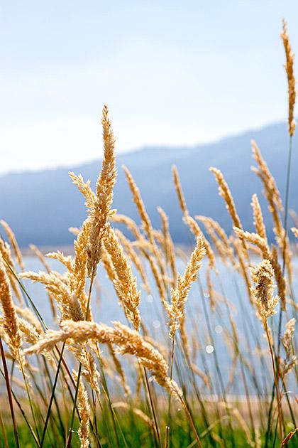 Idaho-Cornfield