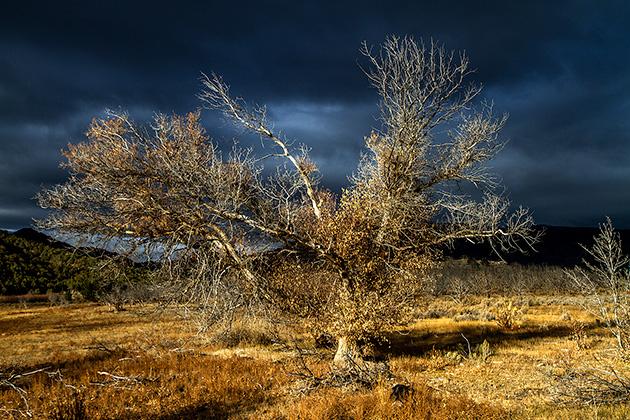 Dramatic-Tree