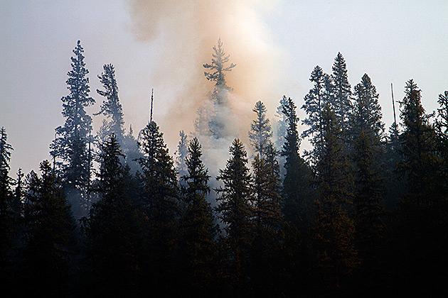 Colgate-Lick-Fire-2012
