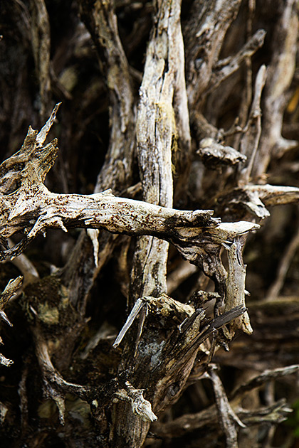 Rooted Idaho