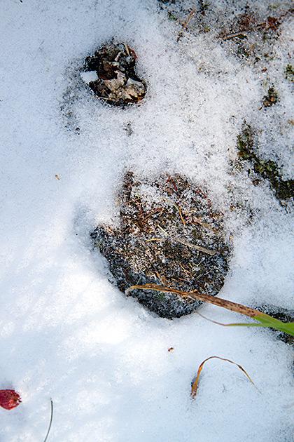 Snow Tracks Idaho