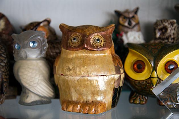 Fat Owl Idaho